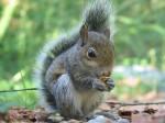 best-squirrel-shot
