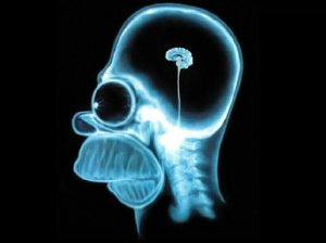 homer-simpson-wallpaper-brain-10242